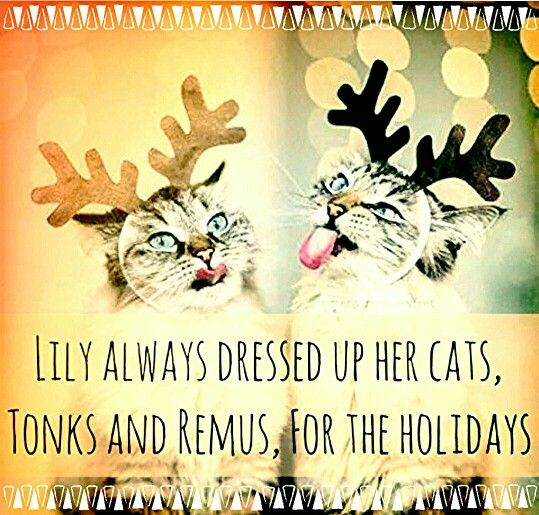 Lily always dressed up her cats, Tonks and Remus, for the holidays.