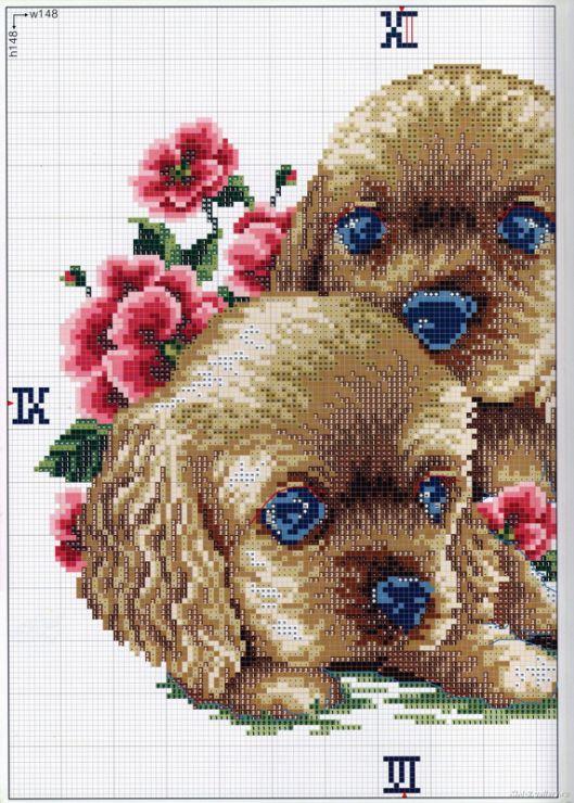 Gallery.ru / Фото #1 - DOGS - KIM-2