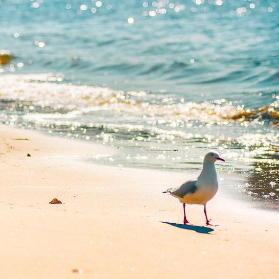 Seagulls love the beach too!!    Beach photography   seagull at the beach   by mylittlepixels