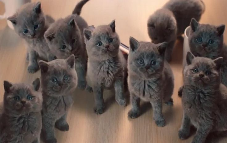 McVitie's Biscuits TV Adverts pours on the cuteness