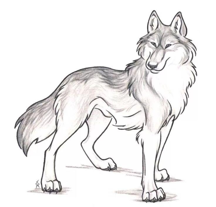 Картинки карандашом волк для детей