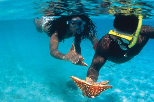 Go snorkeling in the U.S. Virgin Islands!