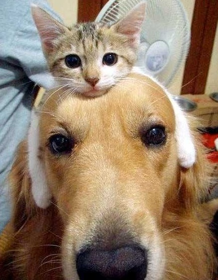 Friendship :)Hats, Random Funny, Cat, Funny Dogs, Best Friends, So Cute, Funny Pictures, Pets, Funny Animal