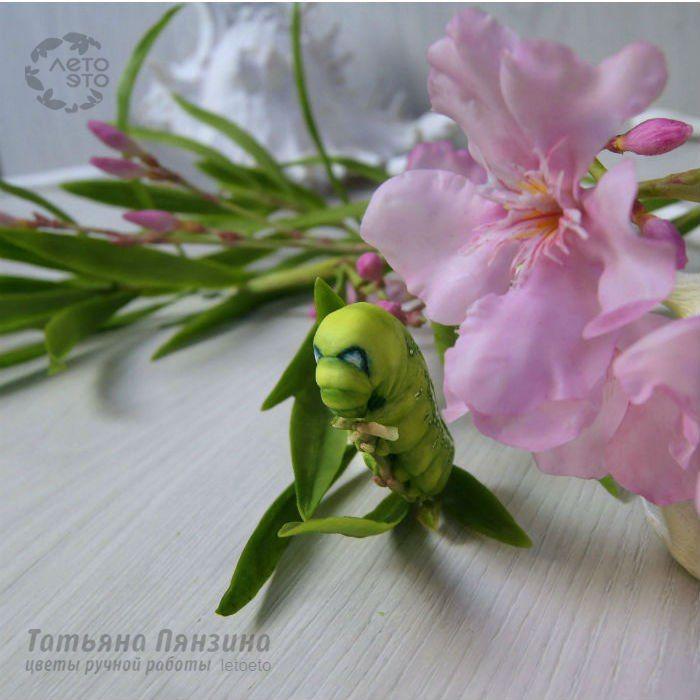 Мои необычные цветы и еще...))) – 133 фотографии
