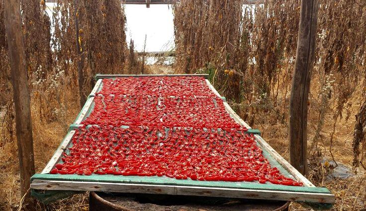 Pomodori al sole