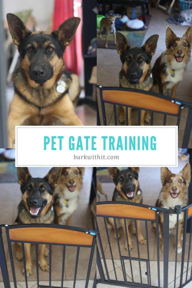 Carlson Pet Gates I am so thankful to Carlson Pet Products for sending meone of their pet gates to try and review. This is a gorgeous pet gate that is sturdy, strong, and also fits the widest part of mykitchen entry way. It's been a struggle finding a gate long enough to place there to train the dogs to keep out of the kitchen. Gates are wonderful for training your dog if you decide not to use a crate or even to simply teach them certain areas of the house...