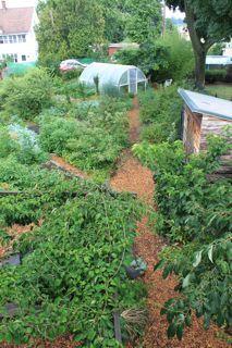 edible forest garden edible landscape