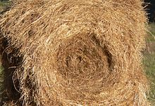 """Poor quality hay is dry, bleached out and coarse-stemmed. Sometimes, hay stored outdoors will look like this on the outside but still be green inside the bale. A dried, bleached or coarse bale is still edible and provides some nutritional value as long as it is dry and not moldy, dusty, or rotting."" Wikipidia"