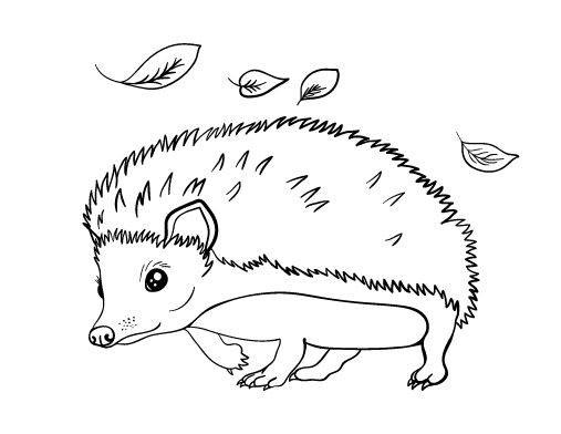 printable hedgehog coloring page free pdf download at httpcoloringcafecom