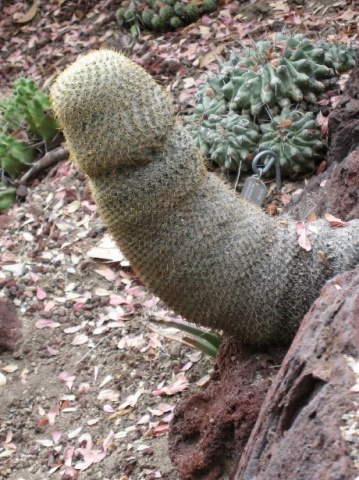 Cactus...I'm still laughing! Nature is awesome! And has a sense of humor. LOL