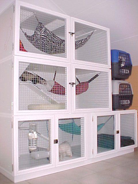 ferret cages | ... .pensacolafishingforum.com/f51/2-ferrets-w-cage-complete-setup-97797