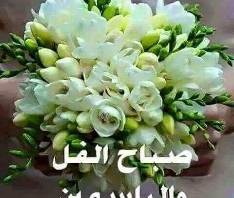 صباح الفل والياسمين على الناس الحلوين كلمات وأشعار صباحية Good Morning Roses Beautiful Flowers Wallpapers Good Morning Arabic