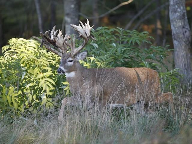 , deer hunt wisconsin, deer hunting wisconsin apple creek buck ranch, deer hunting outfitters
