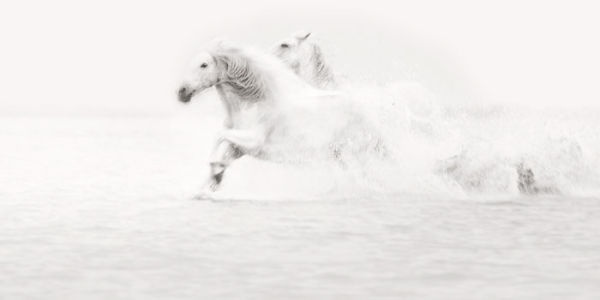 Horses of the Camargue - Jonathan Chritchley