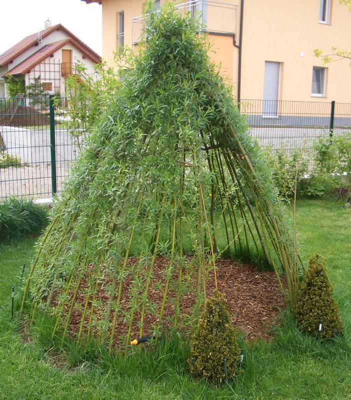 kundenfoto : weidentipi mit ruten einer salix viminalis - sorte , gepflanzt mit bewässerungsschlauch