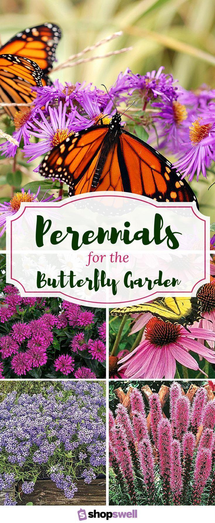 Flower garden pictures - 12 Beautiful Perennials For The Butterfly Garden