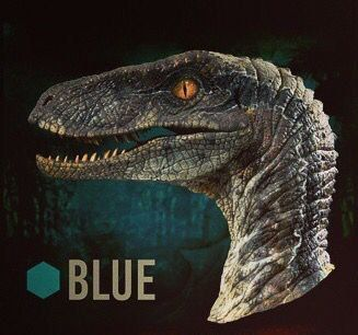 "Which Raptor From ""Jurassic World"" Are You?  You got: Blue  You're the one who sticks it out to the end, the one who takes charge in any situation. You can be a little impulsive at times but your undying loyalty makes up for anyone you might accidentally eat."