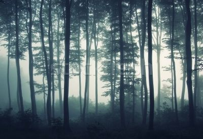 FOGGY MYSTERIOUS FOREST - Google Search
