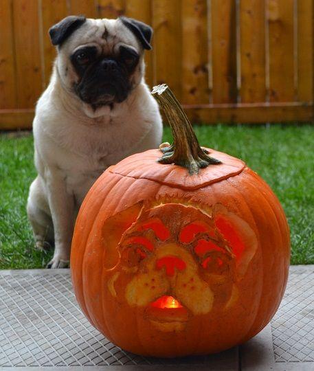 happy halloween from moe moe - Pugs Halloween