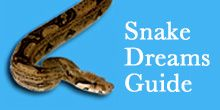 Black Snake Dream - Dream Interpretation