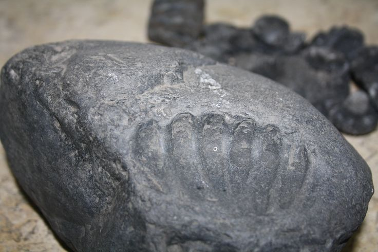 Impresión.  Ammonite