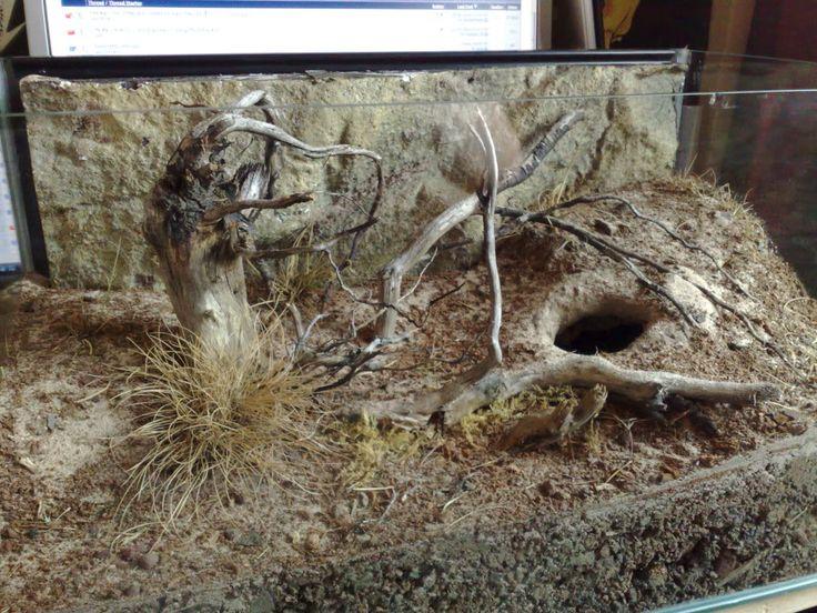 Tarantula naturalistic set up   Inspired By The Natural Habbitat Thread..