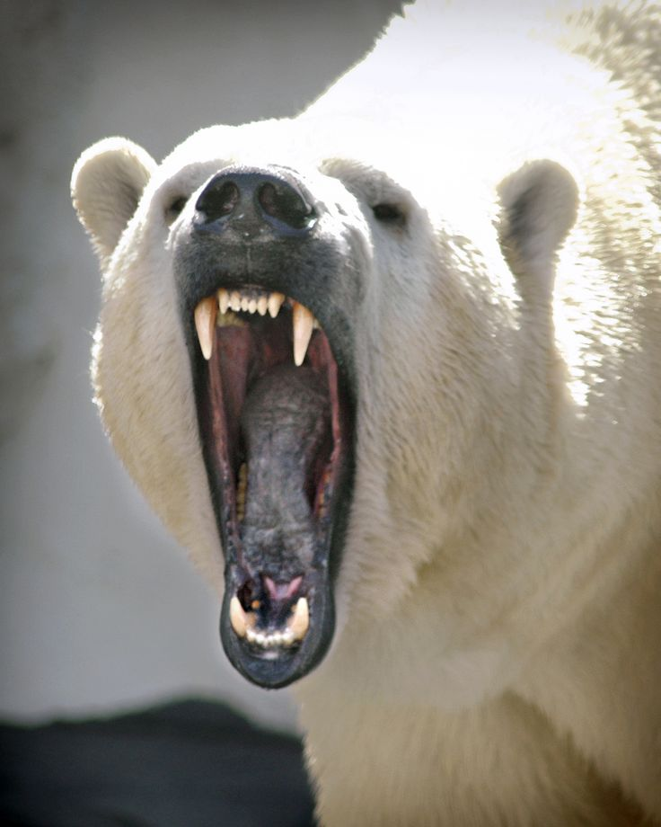 Polar Bear- now that should keep you respectful. They are still wild animals.