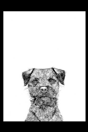 Dog Print by Ros Shiers - Baxter the Boarder Terrier