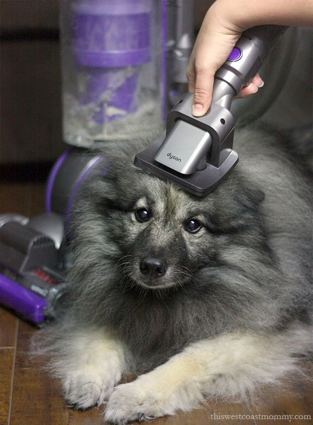 Love at First Clean with the Dyson Ball Animal 2 #DysonClean