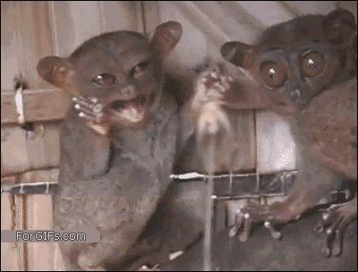 〜おもしろ&かわいい動物動画〜 動物GIFアニメ