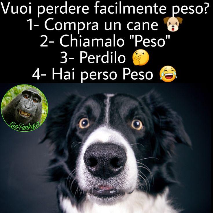 #funny #joke #memesita #battute #risate #indovinelli #humor #battute #immaginidivertenti #divertente #italiano #ridi #ridere #day #divertenti #italy #frasi #battutedivertenti #barzellette #illusione #illusionismo #cane #dog #perderepeso #dimagriresenzasforzi #dimagrire #perderpeso #perderpeso #peso #dieta