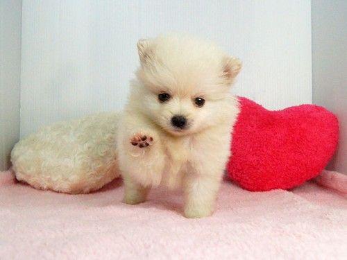 ペットを飼いたい貴方に 人気のペットをランキングでご紹介 ペット かわいいペット 子犬