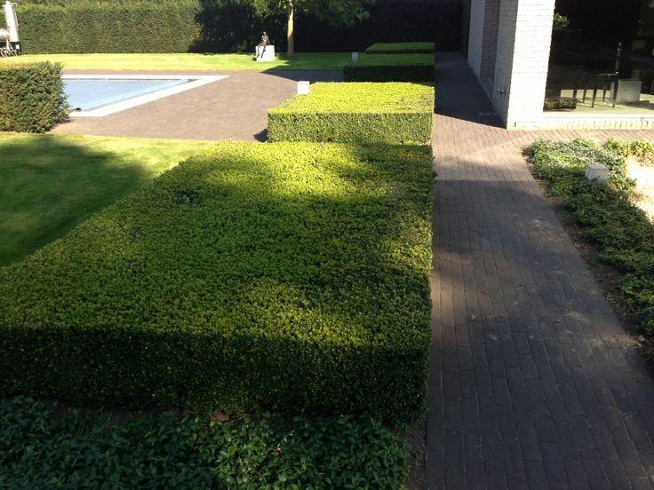 http://www.tuinarchitectuur-verellen.be/tuinen-realisaties/hedendaagse-tuinen/