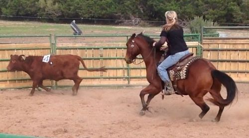 Bay AQHA Quarter Horse Gelding, Cow Horse Family Horse Safe and Broke in Texas. DreamHorse.com is the premier horse classifieds site with horses for sale, lease, adoption, and auction, breeding stallions, and more.