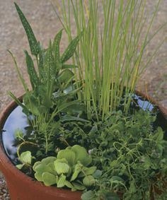Make a Big Splash with a Tiny Water Garden: Plunge into the world of aquatic plants by designing a mini-pond in a small container. Learn how here http://www.finegardening.com/design/articles/make-big-splash-with-tiny-water-garden.aspx