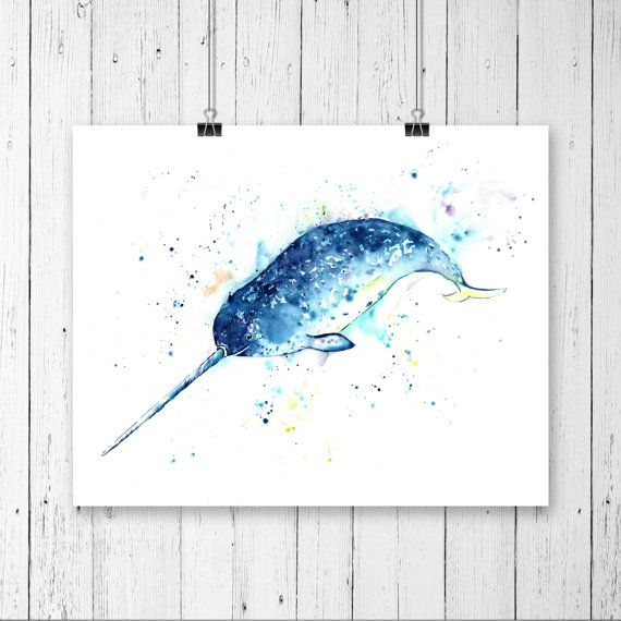 1000+ Ideas About Narwhals On Pinterest