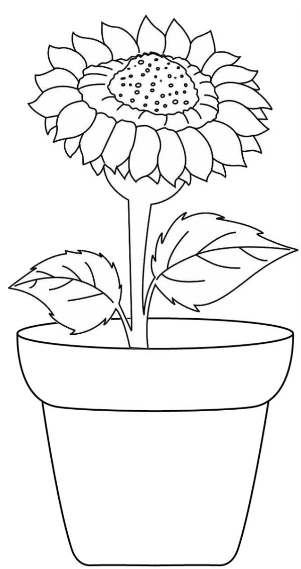 Free Sunflower Coloring Pages For Kids In 2020 Sunflower Coloring Pages Sunflower Colors Flower Coloring Pages