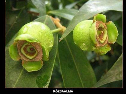 Las Flores Más Exóticas y Hermosas Del Mundo... - Taringa!