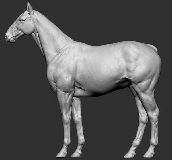 """horse anatomy study. reproduction of """"An Atlas of Animal Anatomy for Artists (Dover Anatomy for Artists)"""" written by W. Ellenberger ,Francis A. Davis."""