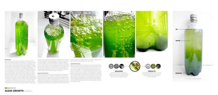 carolyn-butler-algae-growth-02_1.jpg (5323×2339)