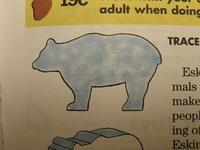 kids soap carving patterns | Bear pattern from Bear handbook