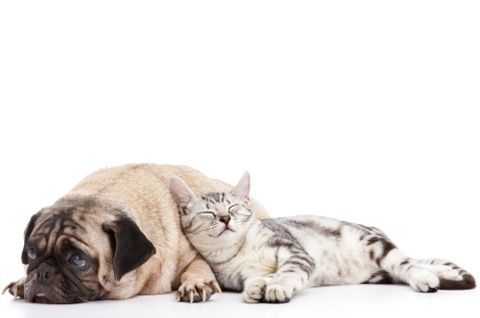 ain't life gland: dr. kim smyth explains common glandular disorders in dogs and cats