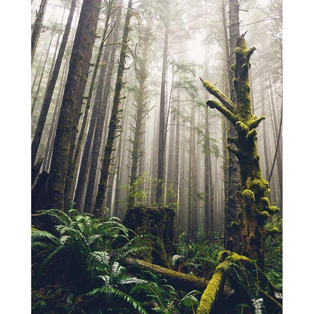 """One of the things I absolutely love about Vancouver Island is the amazing temperate rainforest located along the Juan de Fuca Strait."" Photo taken in Juan de Fuca Provincial Park by @melaniewonder via Instagram. #exploreBC #exploreCanada"