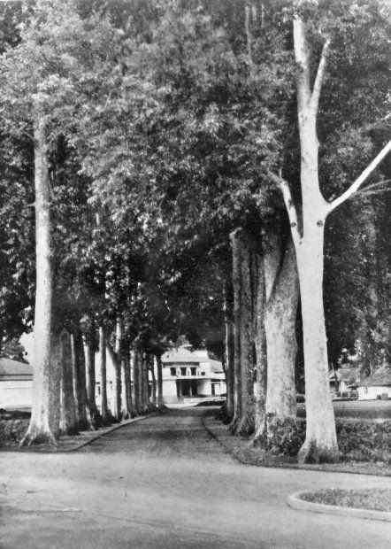 De weg naar het stadhuis te Bandoeng. Bandoeng, West-Java, Nederlands-Indië. 1920-1939