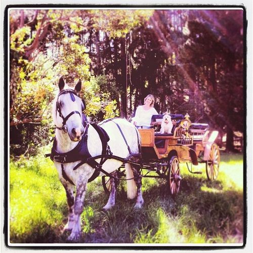 Classic Carriage Drives through the picturesque Montacute Valley, Adelaide Hills  http://www.whatsonforadelaidefamilies.com.au/Business-Classic-Carriage-Drives-For-Family-And-Kids-508