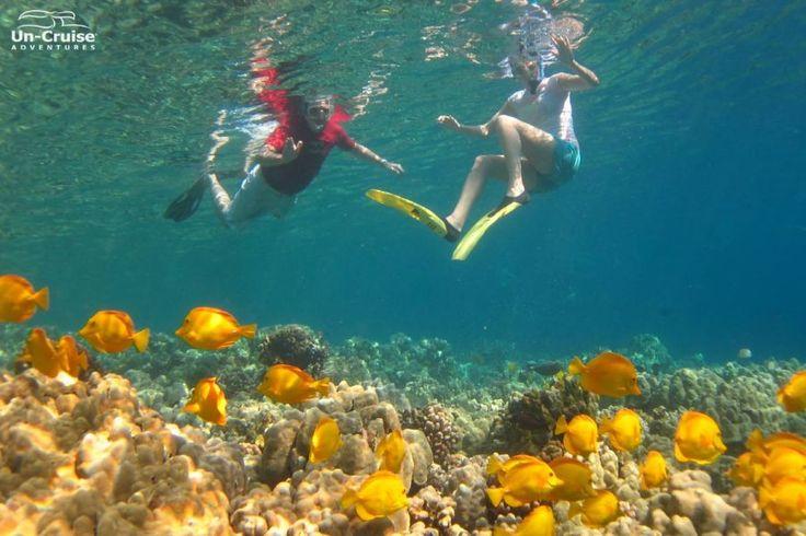 hawaii szigetek - vízalatti kalandozás :D