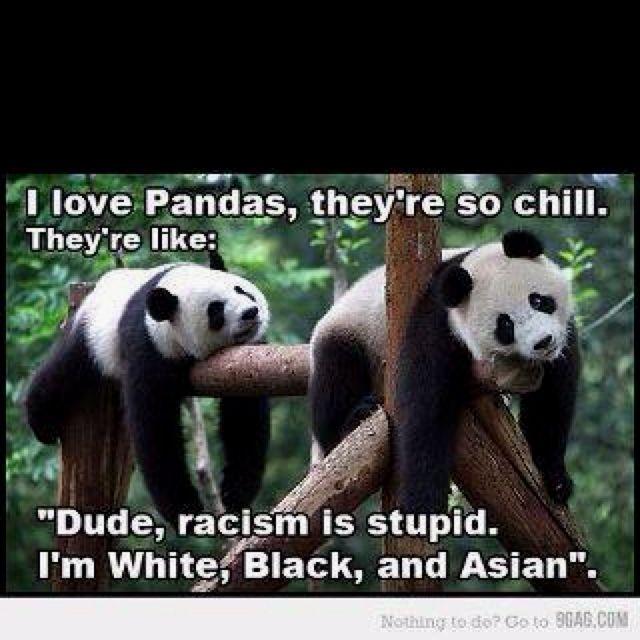 Pandas got it down! Hilarious animal humor.