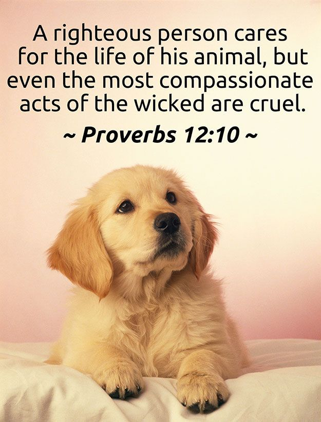 A righteous man regardeth the life of his beast: but the tender mercies of the wicked are cruel.  (Proverbs 12:10)