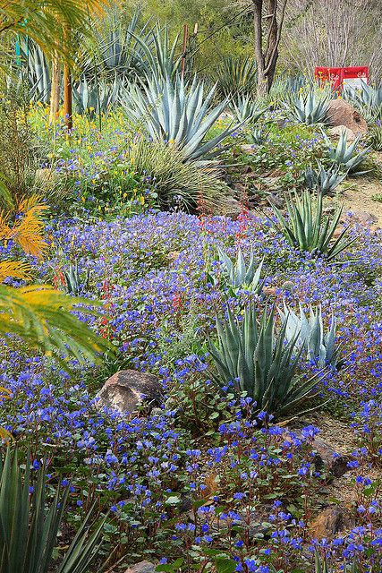 17 best images about desert botanical garden in phoenix on pinterest gardens glass art and for Garden of the phoenix