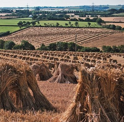 Why is modern wheat making us sick? That's the question posed by author Eli Rogosa in her new book Restoring Heritage Grains.Wheat is the most widely grown crop on our planet, yet industrial breeders have transformed this ancient staff of life into a commodity of yield and profit—witness the increase in gluten intolerance and 'wheat …